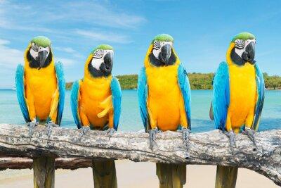 Плакат Синий и золотой ара на тропический красивый пляж и море