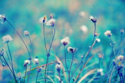 Плакат Синий старинных травяные поля