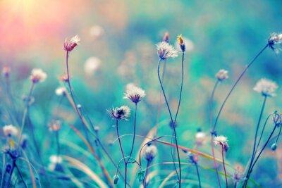Плакат Синий старинных травяные поля на рассвете