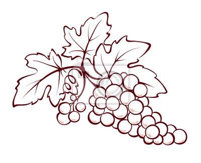 Листья винограда карандашом