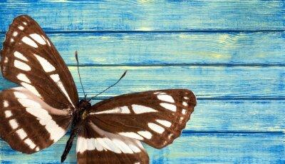 Плакат Бабочка.