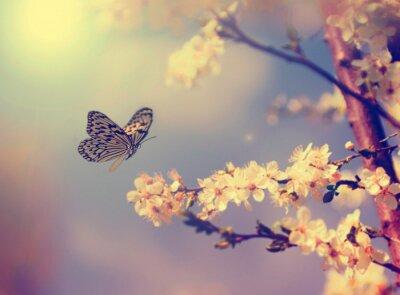 Плакат Бабочка и вишни