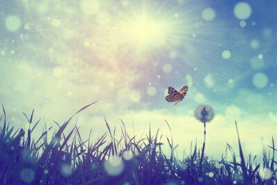 Плакат Бабочка и одуванчик