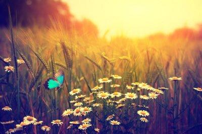 Плакат Бабочка летает весной луг цветы ромашки