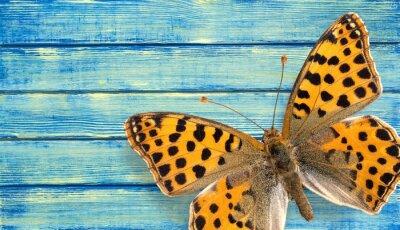 Плакат Бабочка, насекомых, Крыло.