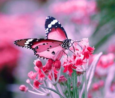 Плакат Бабочка на оранжевый цветок