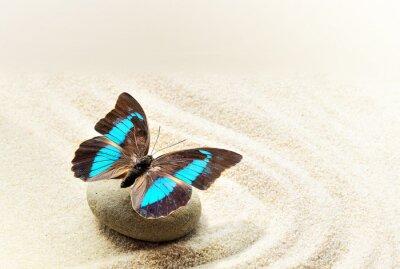 Плакат Бабочка Prepona Laerte на песке