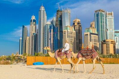 Плакат Верблюд в Дубай Марина