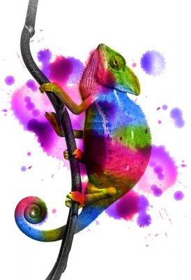 Плакат хамелеон - цвета