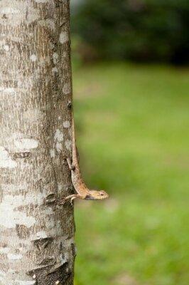 Плакат Переменный Ящерица на стволе дерева