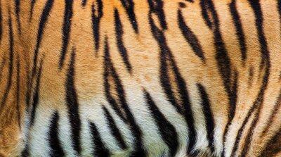 Плакат крупным планом тигра текстуру кожи