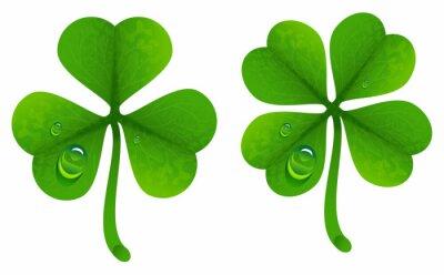 Плакат Листья клевера с каплями росы. Lucky Clover листьев. Четыре листа клевера и тройчатые