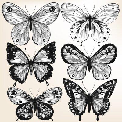 Плакат Коллекция векторных рисованной подробные бабочек для дизайна
