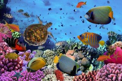 Плакат красочные коралловые рифы с большим количеством рыб