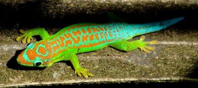Плакат Красочный бирюзовый зеленый геккон