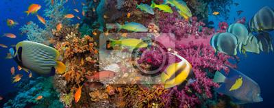 Плакат Кораллы и рыба