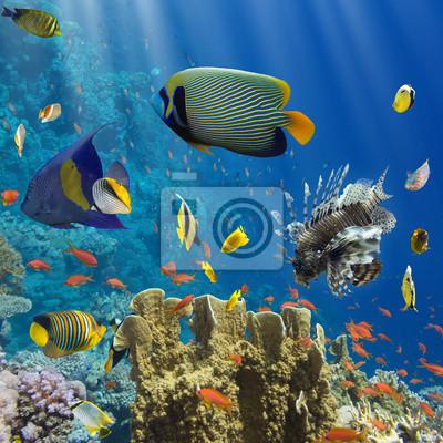 Плакат Кораллы и рыба в Красном Sea.Egypt