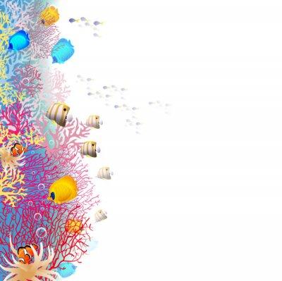 Плакат коралловый риф