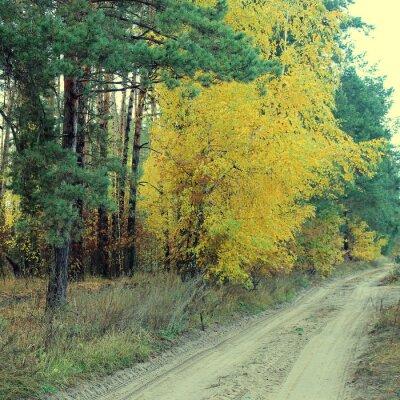 Плакат Сельская дорога в красивый осенний лес