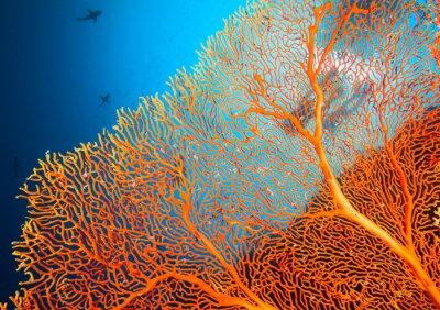 Плакат Пара аквалангистов на коралловом рифе
