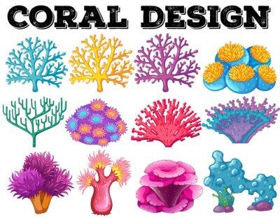 Плакат Различные виды дизайна кораллов