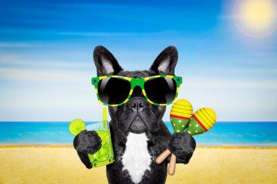 Плакат собака лето пляж коктейль
