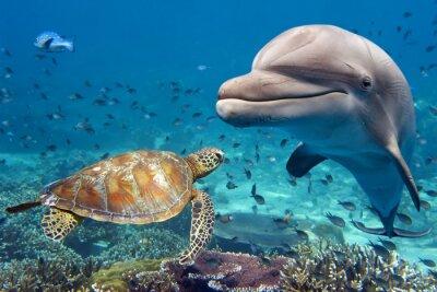 Плакат дельфин и черепаха под водой на рифе
