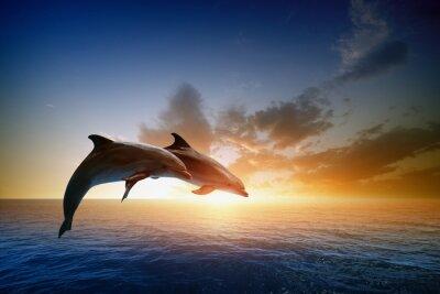 Плакат Дельфины прыжки