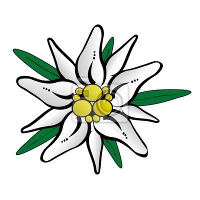 Как сделать цветок эдельвейс своими руками из бумаги