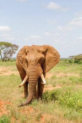 Плакат слон
