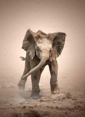 Плакат Слоненок макет зарядки