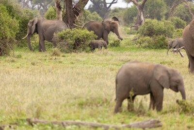 Плакат Elephant Family в Кении