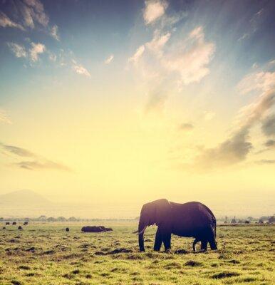Плакат Слон на африканской саванне на закате. Сафари в Амбосели, Кения, Африка
