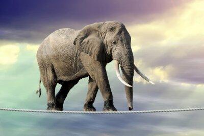 Плакат Слон ходить по канату