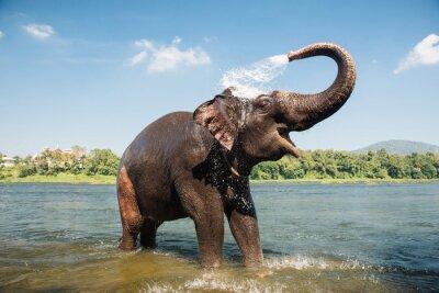 Плакат Слон моется в реке