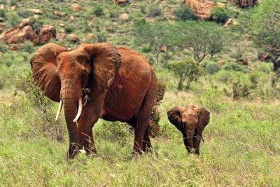 Плакат Слоны