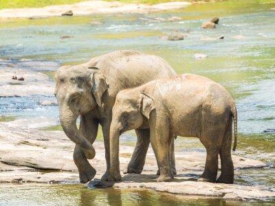 Плакат Elephatnts