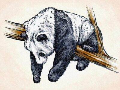Плакат выгравировать чернила ничья панда иллюстрации