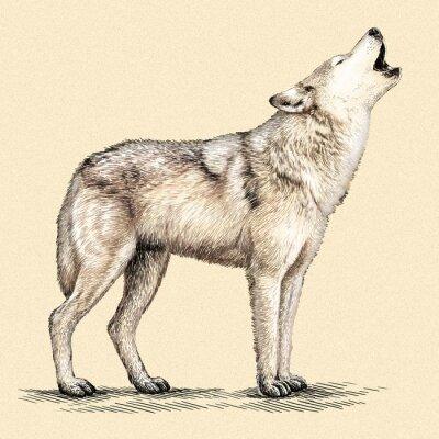 Плакат выгравировать волк иллюстрации