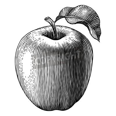 Плакат Гравировка Иллюстрация яблоко Вектор