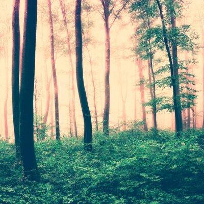 Плакат Фэнтези лес световая сцена