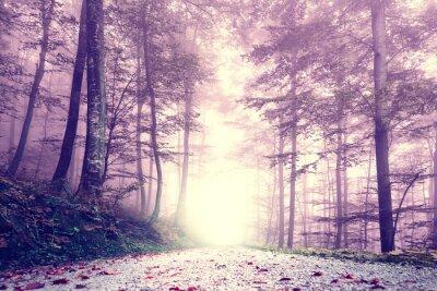 Плакат Фантазия фиолетовый цвет туманный лес дорога. Мечтательный сказочный цвет лесной пейзаж.