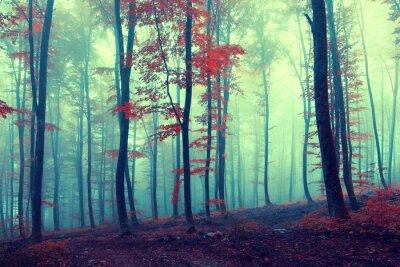 Плакат Фэнтези старинные осенний лес