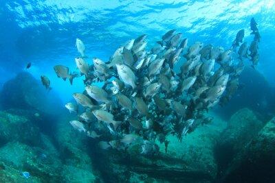 Плакат Рыба школа на подводных коралловых рифов в море океан