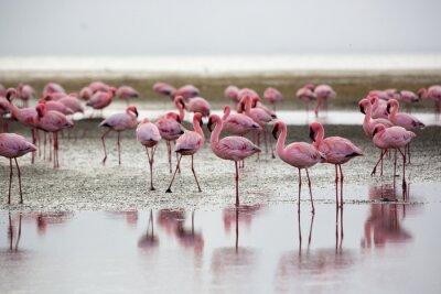 Плакат Фламинго в Уоллис-Бей, Намибия, Африка