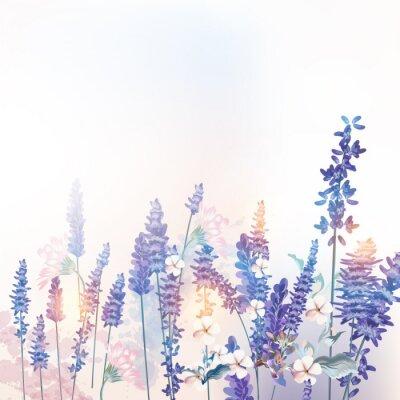 Плакат Floral vector spring illustration with field flowers lavender, morning light