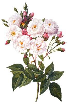 Плакат цветок иллюстрации