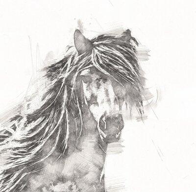 Плакат freehand horse head pencil drawing