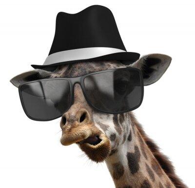 Плакат Забавный животное портрет жирафа с оттенками и фетровой шляпе