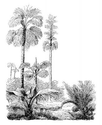 Плакат Gebang and Nipa Palm Trees vintage illustration.